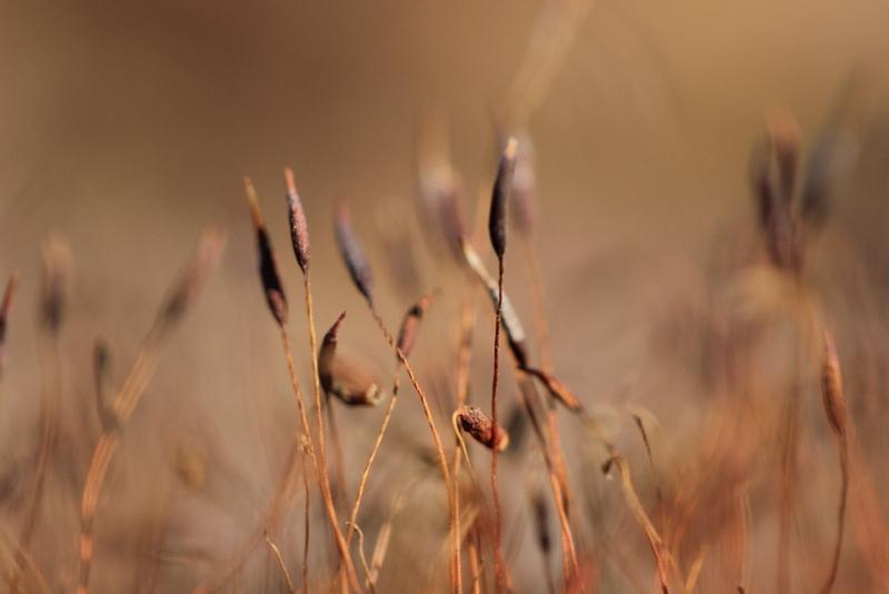 micro plant 0848-001